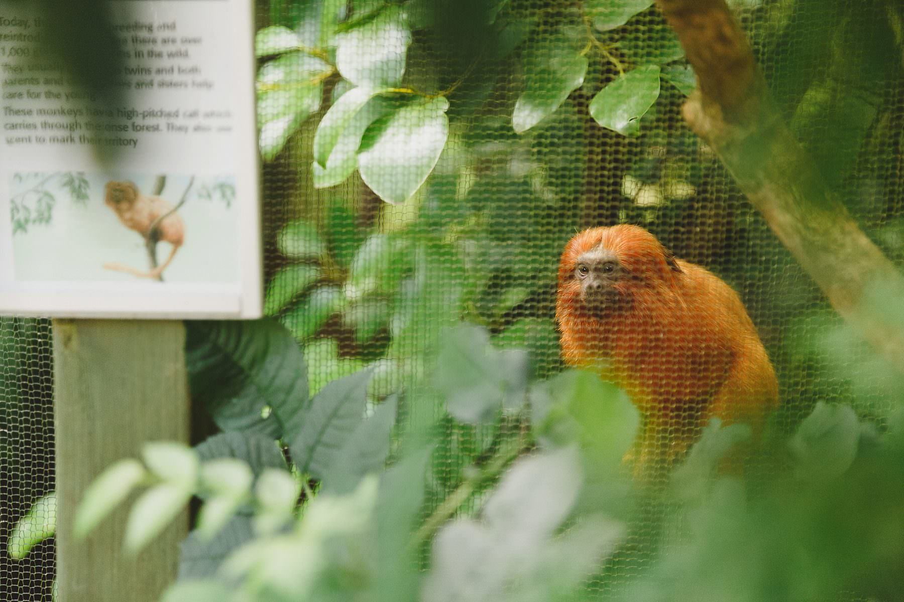 weddings-at-bristol-zoo-009