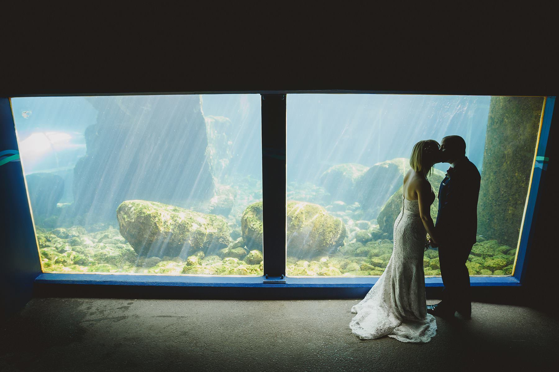 bristol zoo underwater portraits bride and groom